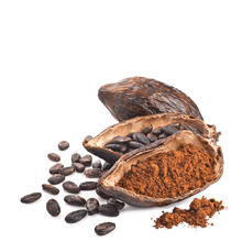 extracto de cacao